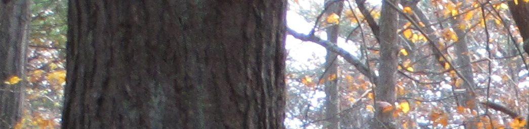 cropped-Fall-2011.jpg